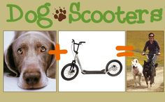 Dog Scootering - a form of dryland mushing. SO much fun and SO good for the dogs! You don't need a whole team, so it's perfect for someone with one or two dogs, and it's less expensive to get into than sledding.