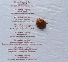 Oh Lady Bug – living lightly ~ – Medium