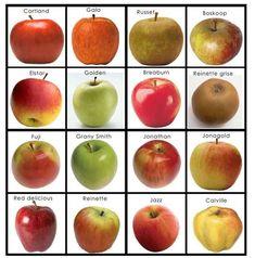 Pre K Activities, Montessori Activities, Fruit And Veg, Fruits And Veggies, Tarte Fine, Apple Tea, Pomes, Fruit Dishes, Autumn Crafts