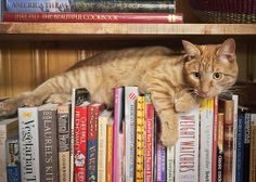 Smarty Pants Cat on books