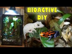 GENESIS EXOTICS IS NOW: https://www.thebiodude.com/ A step-by-step video on how to build a self-cleaning vivarium for small lizards, geckos, skinks, anoles and other small reptiles.