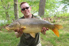 A nice 19 lb common carp from Algonkian Regional Park in Sterling Va. Common Carp, Regional, Park, Nice, Parks, Carp, Nice France