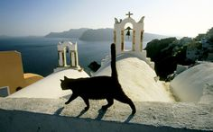 Black cat on the church roof