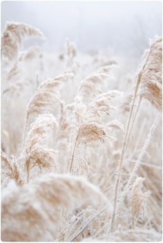 Winter Prairies - feather grass time of year