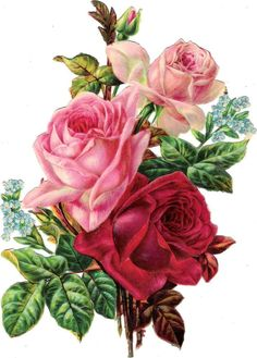 Oblaten Glanzbild scrap die cut chromo Rose  XL 23cm Blume flower fleur