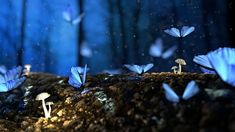 Free Image on Pixabay - Butterfly, Blue, Forest, Fantasy - Orchideen Uhd Wallpaper, Wallpaper Backgrounds, Desktop Wallpapers, Nature Wallpaper, Beautiful Wallpaper, Iphone Backgrounds, Screen Wallpaper, Lucid Dreaming, Dreaming Of You