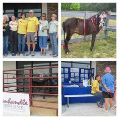 Panhandle Equine Rescue, Inc. participated in Tractor Supply Co.'s Out Here with Animals Day this past weekend. Thank you for helping us spread the word about Equine Rescue!