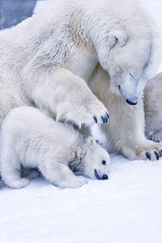 Mother bear                                                                                                                                                     Mais