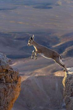 Animal Species, Wonders Of The World, Amazing Photography, Kangaroo, North America, Wildlife, Nature, Woods, Angel