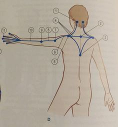 How to fix a Dowager's hump - Posture Direct