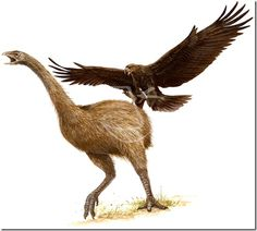 haast's eagle hunting New Zealand moa Extinct Animals, Rare Animals, Animals And Pets, Eagle Hunting, Evolutionary Biology, Bird Stand, Historia Natural, Canada Images, Legends And Myths