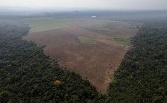 Amazon Deforestation Spikes 190 Percent After Long Reported Decline