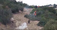 GREATHUNTING: Wild Boar Attacks Hunter