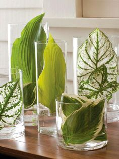 Tip-Of-The-Day With the greenery everywhere this summer try this tabletop display to amaze your guests or to breathe a bit of outdoors in: Gather an assortment of vases in various sizes, along with large leaves in a variety of textures and color striations. Put a bit of water in the vases and tuck the leaves inside for a natural display with a modern twist.