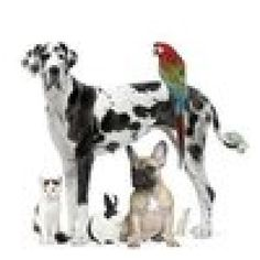 My favorite pic of the month look at that family I love it a great dane french bully a parrot lol a bunny