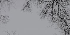 aesthetic gif hunt. ❝ trees in your eyes! … #духовнаялитература # Духовная литература # amreading # books # wattpad