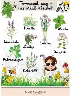 Tervezzük meg - induló készlet - gazigazito.hu Herb Garden, Vegetable Garden, Garden Plants, Home And Garden, Back Garden Landscaping, Natural Life, Back Gardens, Earth Day, Garden Planning