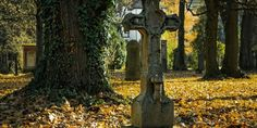 How to Find a Cause of Death When You Don't Have a Death Certificate for Your Ancestor Family Tree Chart, Free Family Tree, Old Family Photos, Old Photos, Ancestor Search, Winter Forecast, Create A Family Tree, Library Of America, Domino Effect