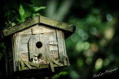 Harris Family Birdhouse   Flickr - Photo Sharing!©ThompCyn Photography - Cynthia Harris http://www.thompcynphotography.com