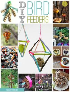 13 Great Ways To Feed Wild Birds!