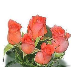 spray rose Allegria orange, coral