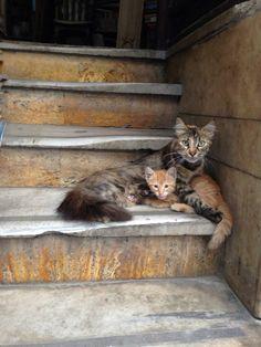 Mum cat