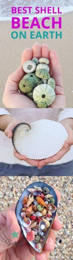 Best Seashell beach on earth - Shells Beachcombing Best place to find shells