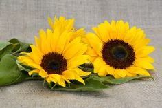 Garden, Sun Flower, Flower, Yellow, Summer #garden, #sunflower, #flower, #yellow, #summer