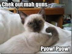 Witty Cat Sayings - Bing images