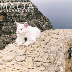 While we wait for this weeks video to upload we might as well enjoy this view point in Blue Grotto  . . #travelingcat #explores #bluegrotto in #malta  . . . . . Follow hashtag #cezarscrew to keep up with the adventure of the most well travellerdcat in the world  . . Also on YouTube follow the link in bio  . @cezars.crew . .     #cezarsthetravelingcat #weeklyfluff #caturday #catlife #lifewithcats #topcatphoto #adventure #mainecoon_feature #mainecooncorner #mainecoonlife #mainecoongram…