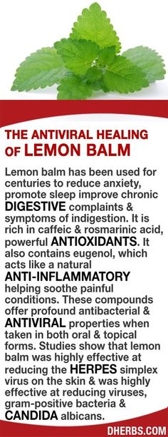 Lemon balm has been used for centuries to reduce anxiety, promote sleep improve chronic digestive complaints & symptoms of indigestion. Rich in caffeic & rosmarinic acid, powerful antioxidants, eugenol acts like a natural anti-inflammatory soothing painful conditions that offer profound antibacterial & antiviral properties in both oral & topical forms. Studies show lemon balm is highly effective at reducing  herpes simplex virus on the skin &  reducing viruses, gram-positive