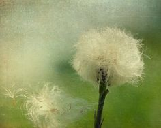 Hey, I found this really awesome Etsy listing at https://www.etsy.com/listing/46813563/home-decor-emerald-green-dandelion