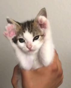 Kittens Cutest Baby, Cute Baby Cats, Cute Cats And Kittens, Funny Cute Cats, Cute Cat Gif, Cute Funny Animals, Baby Animals Super Cute, Cute Little Animals, Gato Gif