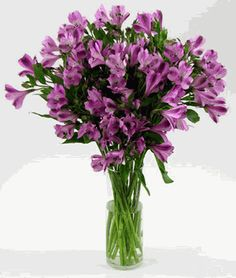 purple alstroemeria - Symbolizing friendship and devotion, the alstroemeria's leaves grow upside down, with the leaf twisting as it grows out from the stem, so that the bottom is facing upwards – much like the twists, turns and growth of our friendships. (Description from Teleflora)