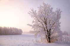 """Soul Of The Sunbeam ~ """"It is the life of the crystal, the architect of the flake, the fire of the frost, the soul of the sunbeam. This crisp winter air is full of it. """" --John Burroughs .... Winter Photo by Karen Hunnicutt on Flickr ...."""