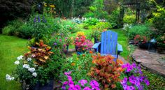 A Surprising Health Benefit of Gardens