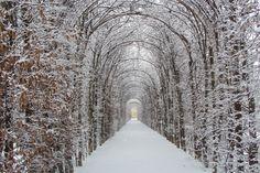Giardini del Parco Ducale Colorno PR Italy http://www.reggiadicolorno.it/giardino-reggia-colorno.php