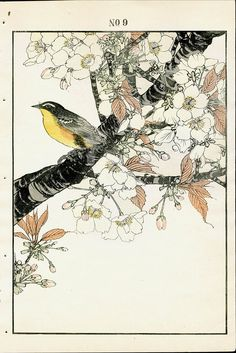 Antique prints of Kihitaki, Plum Branch - Spring from 1891 Keinen Imao Woodblock 1st Edition Birds & Flowers Japan