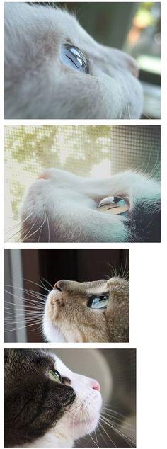 투명한 고양이 눈 Animals And Pets, Baby Animals, Funny Animals, Cute Animals, I Love Cats, Cool Cats, Cute Animal Pictures, Pretty Cats, My Animal