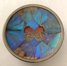 Beautiful-older wide Real Butterfly wings hanging Art. Butterfly Frame, Blue Butterfly, Butterfly Wings, Blue Morpho, Plate Art, Hanging Art, Taxidermy, Vintage Decor, Brazil