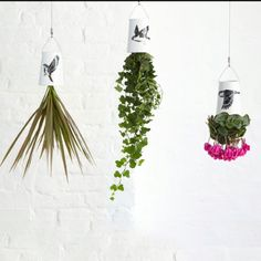 Sky Planter Mini Birds 3 Pack / Boskke - great for households with Cats! Now I don't have to worry about them munching on my plants! Growing Tomato Plants, Growing Tomatoes, Baby Tomatoes, Cherry Tomatoes, Terrariums, Upside Down Plants, Varieties Of Tomatoes, Tomato Farming, Plant Needs