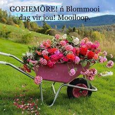 Pink Flowers, Beautiful Flowers, Wheelbarrow Planter, Pinterest Garden, Front Yard Landscaping, Garden Inspiration, Garden Pots, Beautiful Gardens, Container Gardening