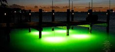 underwater dock lights