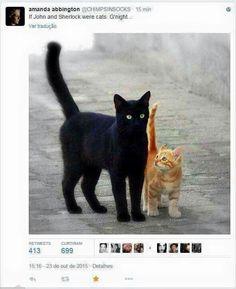 😺🐾🧡🧡🧡 Fotografía de gatos, ideas para fotos 📸 y hallazgos 💡 - Katzen - Pretty Cats, Beautiful Cats, Animals Beautiful, Cute Animals, I Love Cats, Crazy Cats, Cool Cats, Cute Kittens, Cats And Kittens