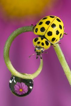 A guide to British ladybirds – in pictures