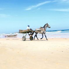 Horse speeding through the beach in Dakar, Senegal Photo by @chrishouns