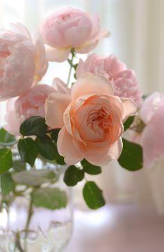 Roses ... My favorite color rose too. :-)