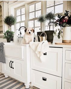 Sunday morning is looking pretty cute!...Tag a friend who would love this too!... credit