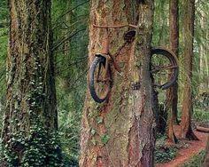 ağaca gömülen bisiklet ile ilgili görsel sonucu