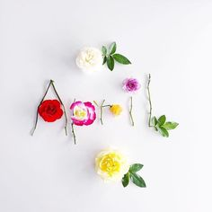 Flowers wallpaper iphone rose posts New Ideas Flower Words, Flower Quotes, Flower Art, Flower Wallpaper, Wallpaper Backgrounds, Iphone Wallpaper, New Month, Instagram Highlight Icons, Spring Has Sprung